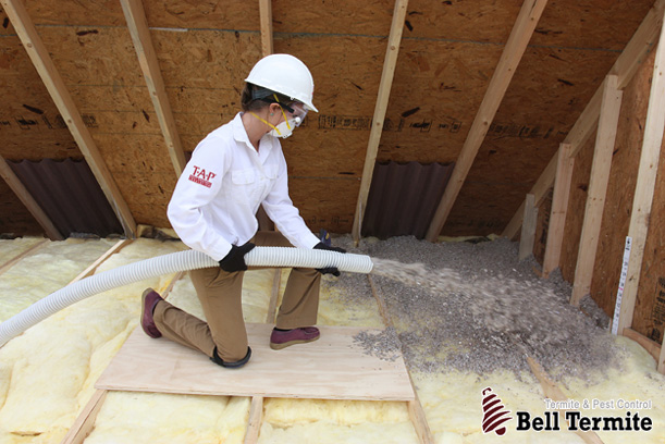 FREE Attic Inspection | Free Pest Control Inspection