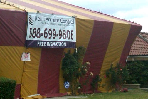 Free Termite Inspection in Long Beach | Long Beach Pest Inspection | Free Termite Inspection in San Pedro